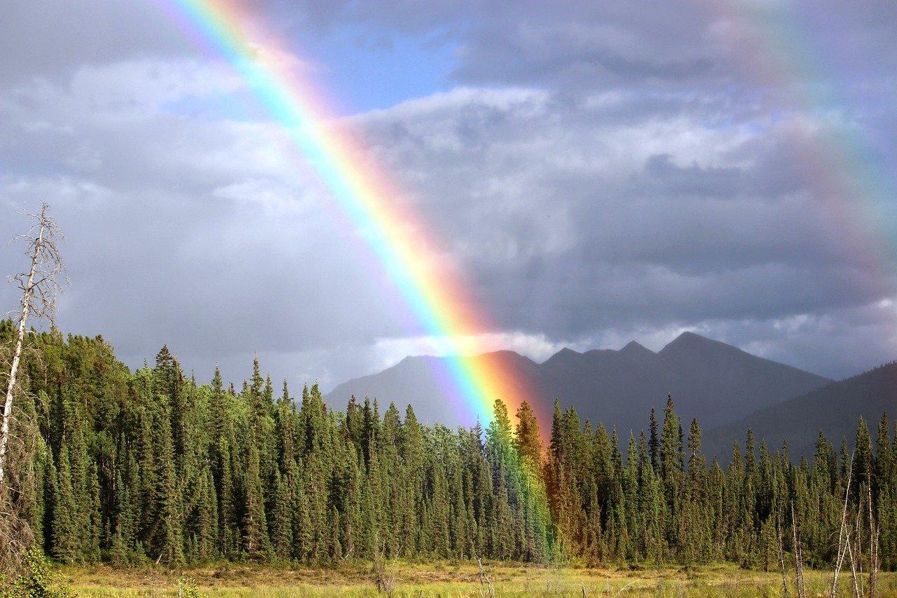 Zwei Regenbögen vor einem Wald, entstanden durch Refraktion des Lichts.